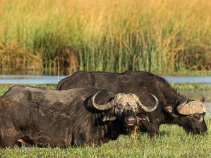 5 Days Wetlands and Classic Okavango, Botswana Safaris