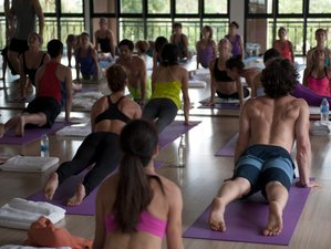 8 Day Wellness Holiday with Unlimited Yoga and Group Fitness Classes in Koh Samui, Surat Thani