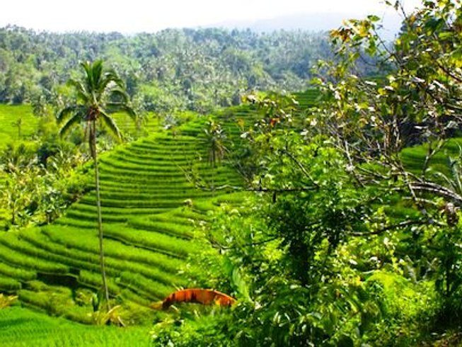 8 Days Writing and Yoga Retreat in Bali, Indonesia