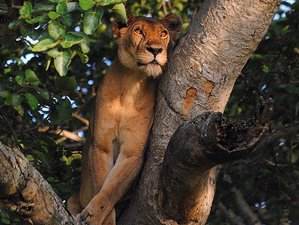 12 Days Secret of the North Safari in Uganda