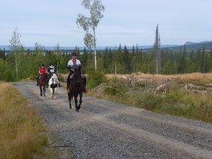 3 Days Saddle and Paddle Horseback Riding Holiday in Lapland, Sweden
