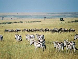 6 Days Maasai Mara, Lake Nakuru, and Amboseli Kenya Safari