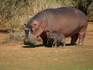 8 Days Lake Manyara, Serengeti, Ngorongoro Crater, and Tarangire National Park Safari in Tanzania