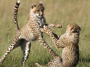 3 Days Camping Safari in Maasai Mara National Reserve, Kenya