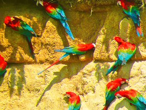 6 Day Nature Walks and Wildlife Tour in Manu National Park, Cusco Region