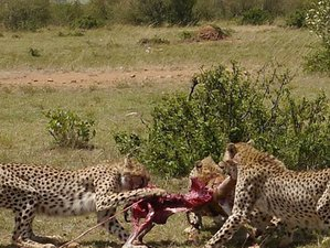 3 Days Budget Great Migration Safari in Maasai Mara National Reserve, Kenya