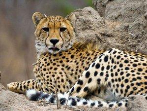 3 Days Exploring Pilanesberg National Park Safari in South Africa