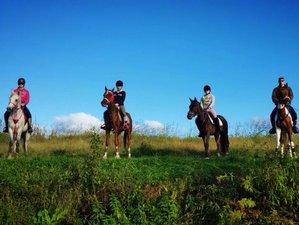 3 Day Zafro Horse Riding Holiday in Bjelovar, Bjelovar-Bilogora County
