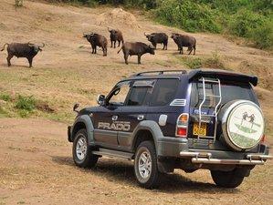 2 Days Memorable Safari in Lake Mburo National Park, Uganda