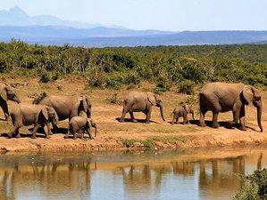 5 Days Serengeti National Park and Ngorongoro Crater Safari in Tanzania
