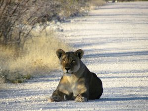 5 Days Private Guided Wildlife Safari in Etosha National Park, Namibia