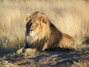 10 Days Pumba Safari South Africa