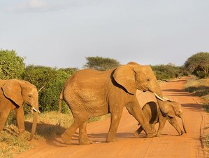 3 Days Safari Adventure in Tsavo East and West National Park, Kenya
