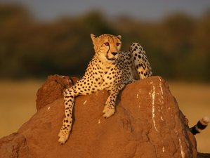10 Days Budget Safari in Namibia
