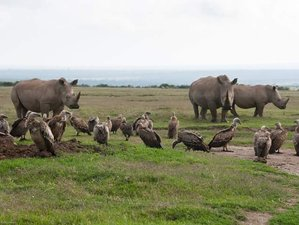 13 Days Legendary Expedition of Kenya Safari