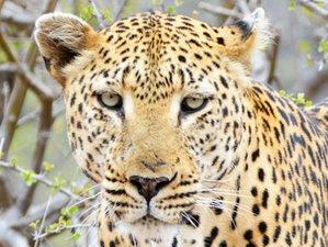 5 Days Naledi Game Lodge Wildlife Safari in South Africa
