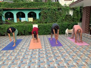 6 Day Mind and Body Detox Yoga Retreat in Rishikesh, Uttarakhand