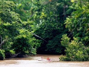 4 Day Grand Adventure Wildlife Tour in Amazonas, Brazil