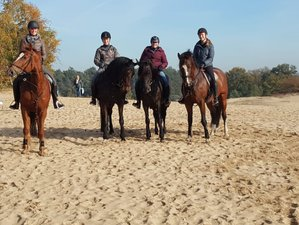 4 Day Discover The Veluwe Horse Riding Vacation in Kootwijk, Gelderland