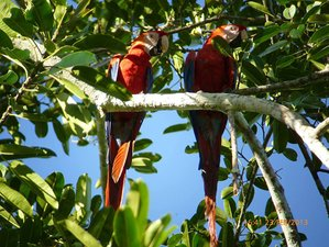 6 Day Jungle Expedition Wildlife Tour in Manu National Park, Loreto