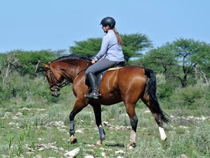 7 Days Horseback Riding Namibia Safari