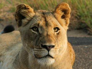 2 Day Bushveld Southern Kruger Safari