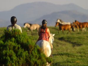 5 Days Wolf and Wild Horse Territory Horse Riding Holiday in Geres, Portugal