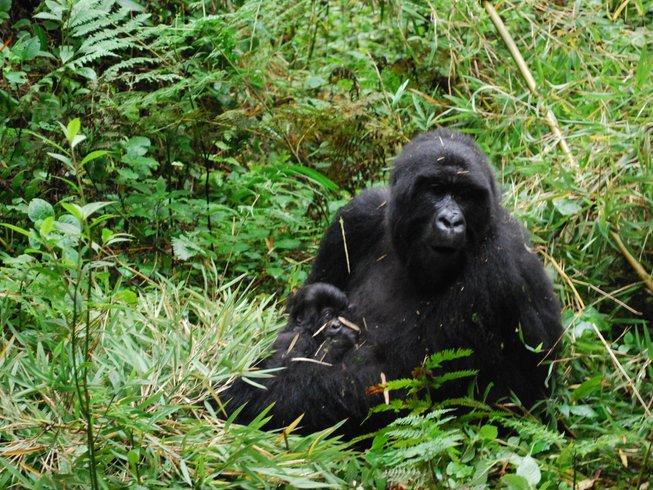 8 Days Delightful Safari in Uganda