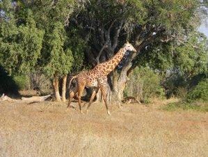 4 Days Hakuna Matata Special Safari in Taita-Taveta, Kenya