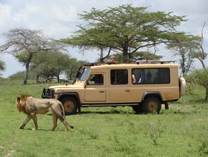 7 Days Wildlife Safari in Selous, Ruaha and Mikumi, Southern Tanzania