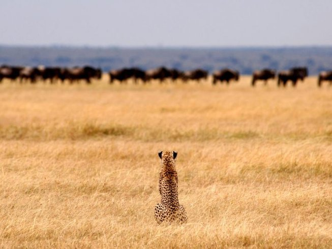 7 Days Camping Safari in Serengeti, Lake Manyara, Ngorongoro, and Tarangire