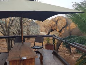 3 Days Safari in Balule National Reserve and Kruger National Park, South Africa