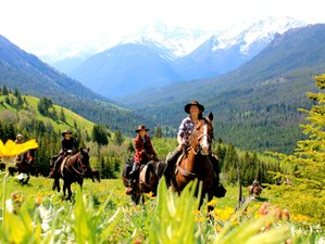 4 Days Bighorn Sheep Tracking and Conservation Ranch Vacation in British Columbia, Canada