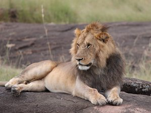 7 Days Amazing Amboseli, Aberdare, Nakuru, Masai Mara Safari in Kenya