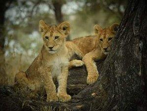 3 Day Classic Safari in Tanzania
