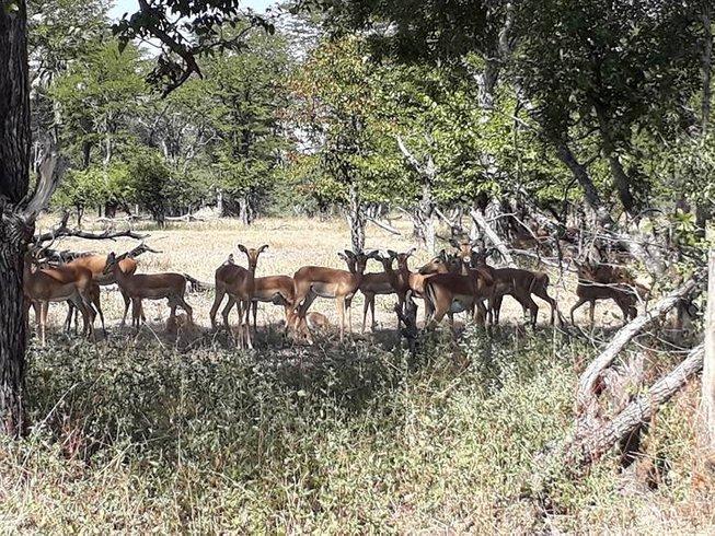 4 Days Zambezi Luxury Safari in Zambia