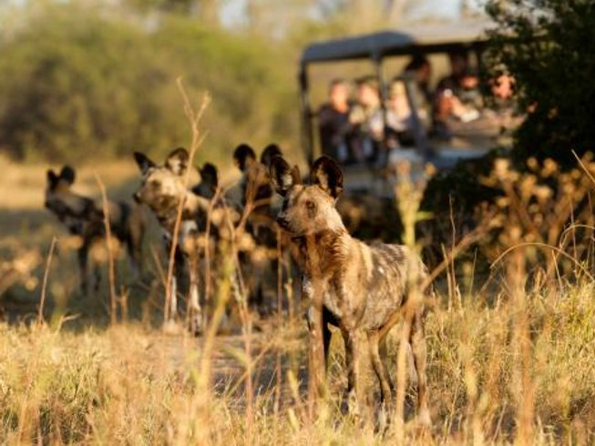 10 Days Solo Photography Safari in Botswana