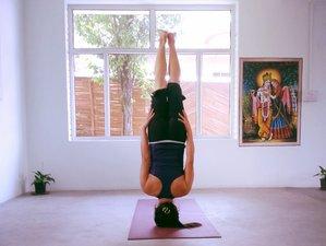 5 Months 1100-Hour Yoga Teacher Training India
