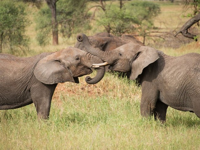 11 Days Family Tanzania Safari