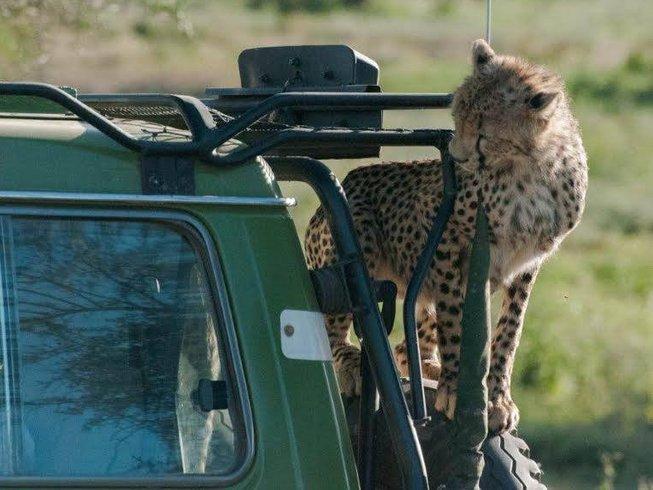 8 Days Honeymoon Safari in Tanzania