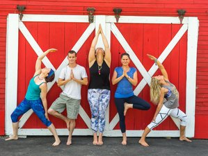 82 Day 200-Hour Online Yoga Teacher Training Course