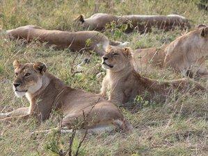 3 Days Simba Masai Mara Safari in Kenya