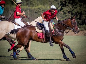 7 Day Ultimate Polo Holiday in Sotogrande