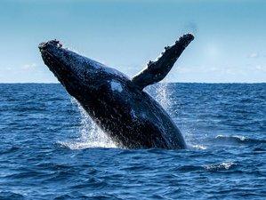 4 Day Explorer Wildlife Tour in Fraser Island, Australia
