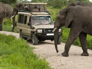 2 Days Guided Mombasa Safari in Kenya