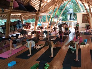 29 Days 200hr Vinyasa Yoga Teacher Training in Bali