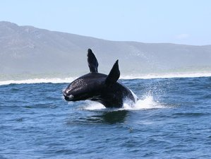 "6 Days ""Garden Route"" Marine Safari South Africa"