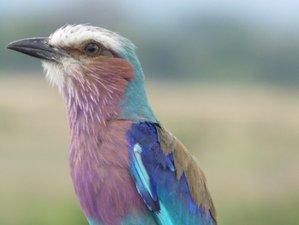 4 Days Greater Ruaha National Park Safari in Tanzania