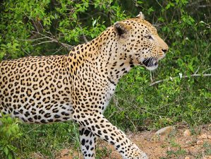 3 Days Cradle of Humankind, Sun City, and Pilanesberg Safari in South Africa