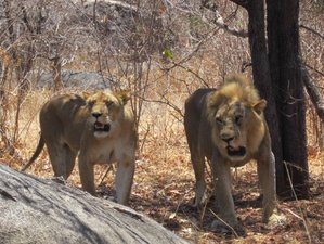 3 Days Wildlife Safari in Mikumi National Park, Tanzania